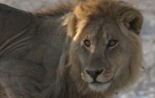 a kings face