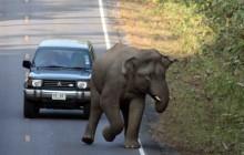 anxious elephant lr