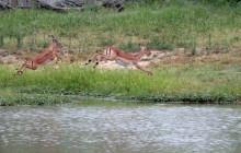 lr 3 impala jumping