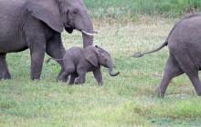 lr elephant 4 months