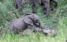 lr elephant kids