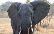 lr inquistive elephant