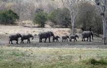 lr line of elephants
