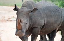 lr rhino 1