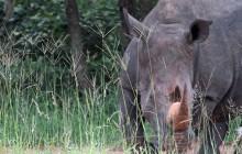 lr rhino