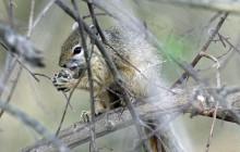 lr squirrel