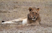 lr styx lion