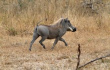 lr warthog