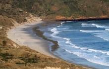 Sealions on beach (far away)
