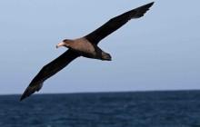 brown sea bird