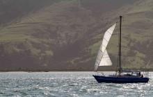 sail boat, dunedin