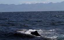 sperm whale and kaikouras
