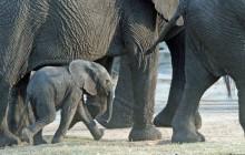 lr baby elephant running
