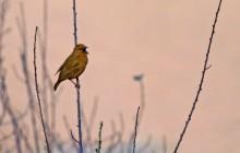 lr bird singing by river
