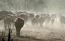 lr  buffalo dust