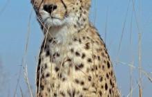 lr cheetah 10