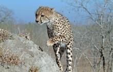 lr cheetah 8