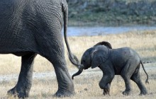 lr cute baby elephant