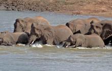 lr elephants in river