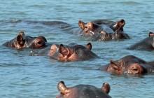 lr hippo eyes