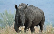 lr white rhino