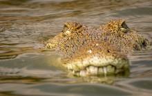 lr Crocodile Uganda 2016-25
