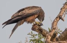 lr Raptor Uganda 2016-10