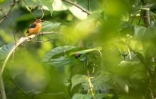 lr dwarf kingfisher Uganda 2016-60