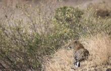 lr leopard 4